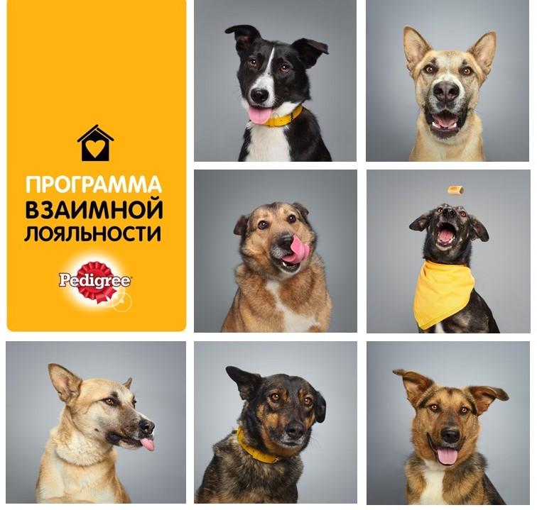 BBDO Moscow & PEDIGREE® cкейсом «Программа взаимной лояльности»